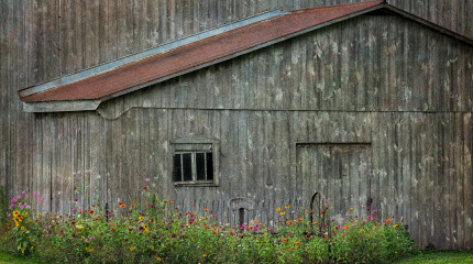 Old Barn,Flowers