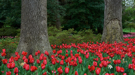 Sherwood Gardens-