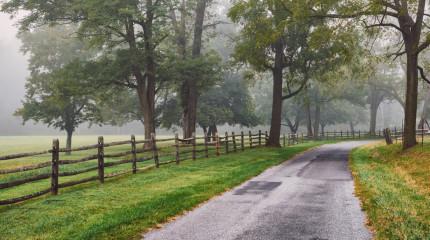 Trees & Fog